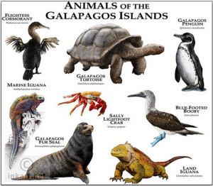 animals-of-galapagos-islands
